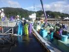 魚市場に荷揚げ始まる